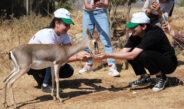 EXPO gönüllüleri dağ ceylanlarının yaşam alanlarını gezdi