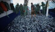 Balıkçıların Doğu Akdeniz'deki av mesaisi başladı